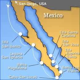 Whale Watching Baja California Cruise Grey Blue Humpback Desert San Ignacio Birdwatching Mexico